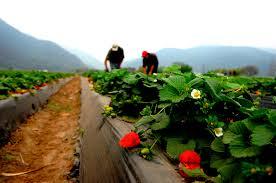¿Quieres formarte en el sector agrario? Estas son tus becas